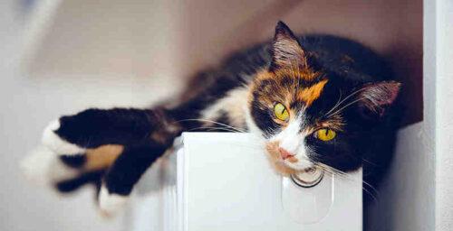 Was ist zu tun, wenn ein Kätzchen erbricht?