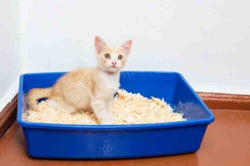 Wann sollte man ein Katzenklo für ein Kätzchen aufstellen?