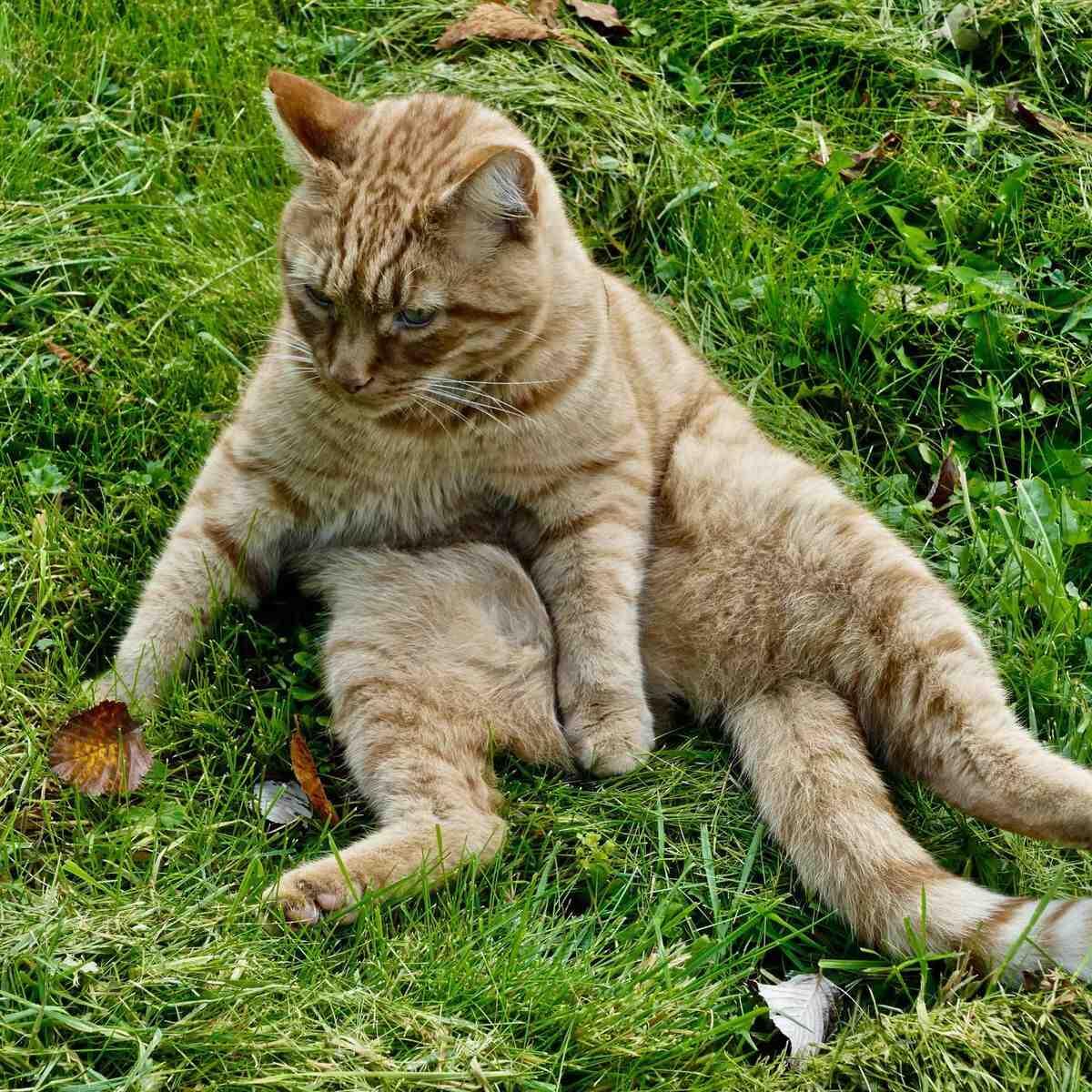 Qu'est ce qui peut attaquer un chat ?
