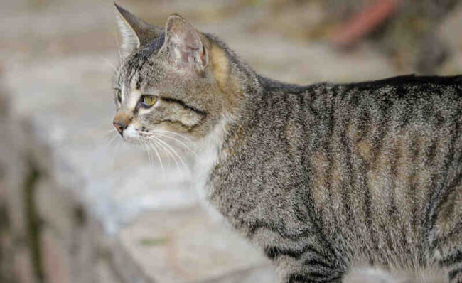 Cat vomiting bile and not eating? What you need to know