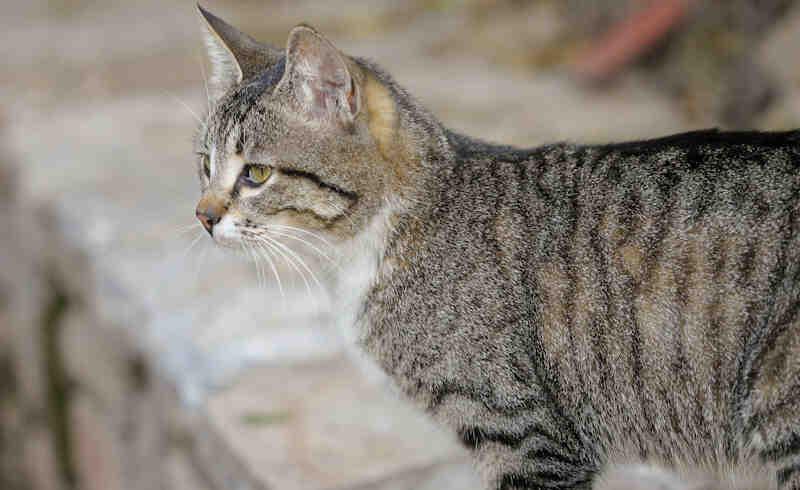 Chat qui vomit de la bile et ne mange plus ? Ce qu'il faut savoir