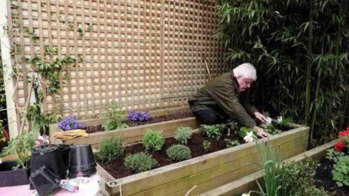 Wie pflanzt man aromatische Pflanzen?