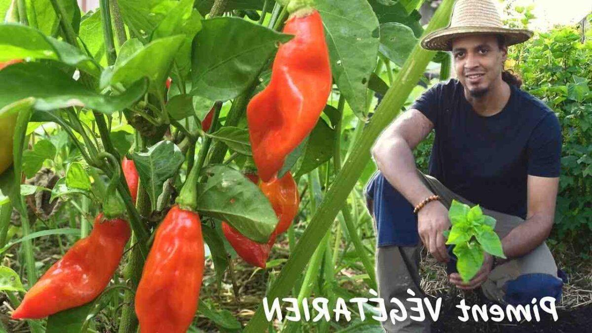 Quand planter épice ?